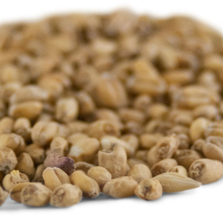 Briess White Wheat